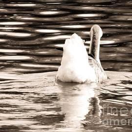 Robyn King - Swan Lake #2 Sepia