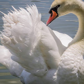 Zina Stromberg - Swan