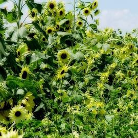 Elizabeth Sullivan - Swarming Sunshine