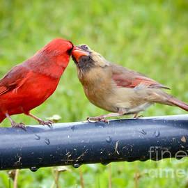 Kerri Farley - Sweet Cardinal Couple