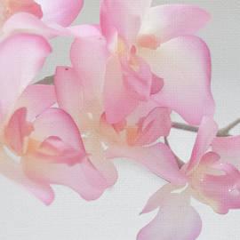 Pamela Williams - Sweet Orchid