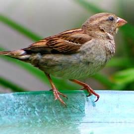 Barbara S Nickerson - Sweet Sparrow
