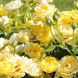 Carol Groenen - Sweet Yellow Roses