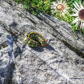 Hanny Heim - Swiss Catarpillar