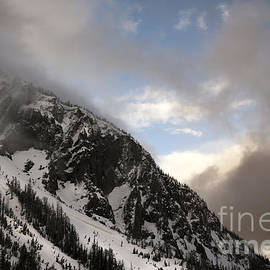 Wildlife Fine Art - Sylvan Pass