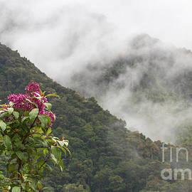 Chris Scroggins - Talamanca Mountains