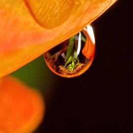 Susan Capuano - Tangerine Drop