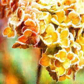 Bonnie Bruno - Tangerine Hydrangeas