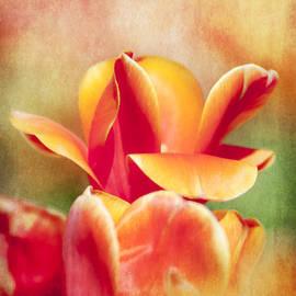 Jeff Mize - Tangerine Tulip Sorbet
