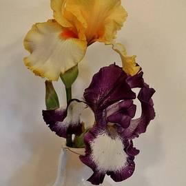 Marsha Heiken - Tango Irises