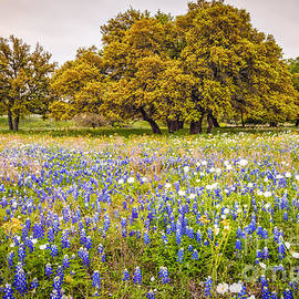 Silvio Ligutti - Tapestry of Wildflowers at Willow City Loop - Texas Hill Country
