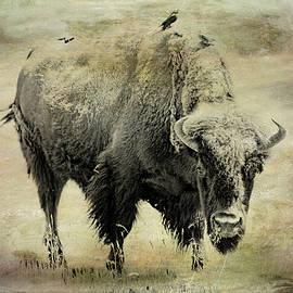 Athena Mckinzie - Tatanka American Buffalo
