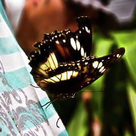 Miroslava Jurcik - Tattered Butterfly