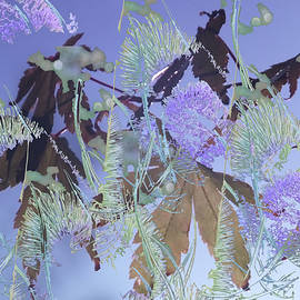 Lyn Perry - Teasel Blooms on Maple