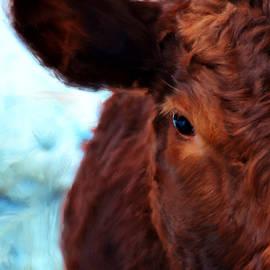 Bruce Nutting - Ten Minute Cow Portrait