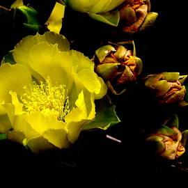 James Granberry - Texas Rose VI