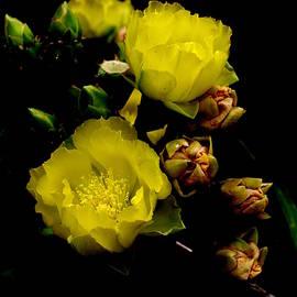 James Granberry - Texas Rose VII