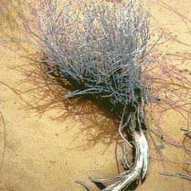 Merton Allen - Texas Tumbleweed