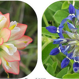 Amy Steeples - Texas Wildflower Collage