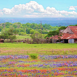 Lynn Bauer - Texas Wildflower Farmland