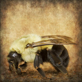 Bill Tiepelman - Textured Buzz