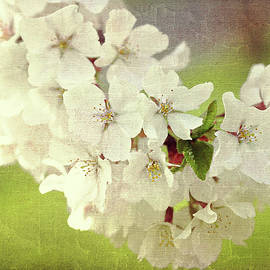 Trina Ansel - Textured Cherry Blossoms