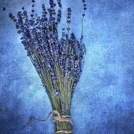 Stephanie Frey - Textured Lavender