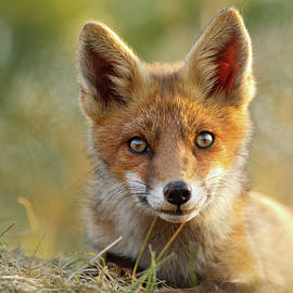 Roeselien Raimond - That Face - Cute Fox Kit