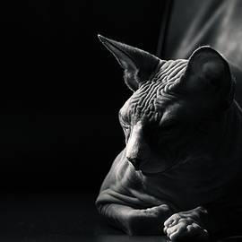Zina Zinchik - That moment of deep contemplation..