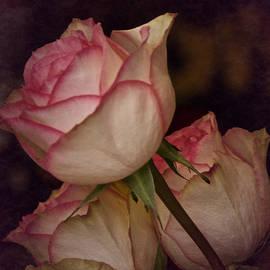 Richard Cummings - The 3 Roses