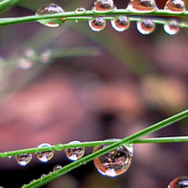 Irma BACKELANT GALLERIES - The Art of Dew Drops
