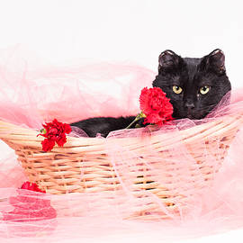 Andrea Borden - The Bachelor Cat- Animal Rescue Portraits