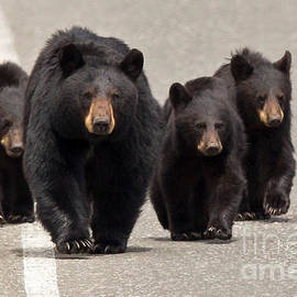 Natural Focal Point Photography - The Bears Are Coming