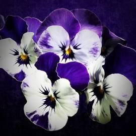 Gabriella Weninger - David - The beauties of spring