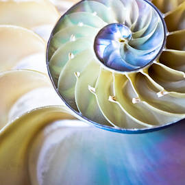 Colleen Kammerer - The Beauty of Nautilus