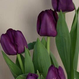 The Beauty of Purple Tulips