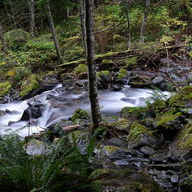 Jeff Swan - The beauty of small water in the forest