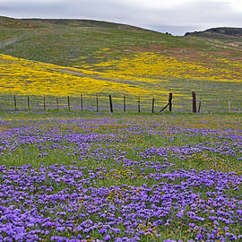 Kathy Yates - The Beauty of the Carrizo Plain