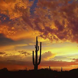 Saija  Lehtonen - The Beauty of the Desert Skies