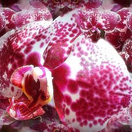 Gabriella Weninger - David - The beauty of the orchid