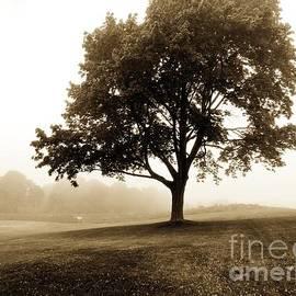 Marcia Lee Jones - The Beauty of Trees