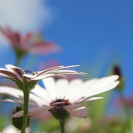 Tash Mohring - The Bees Eye View 1 of 2