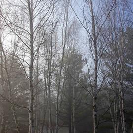 Debbie Oppermann - The Birches