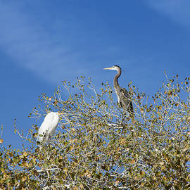 Cathy Franklin - The Bird Bearing Tree