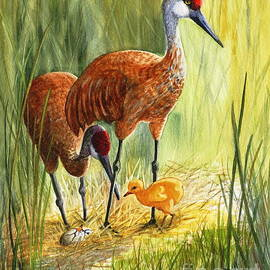 Marilyn Smith - The Blessed Event - Sandhill Cranes