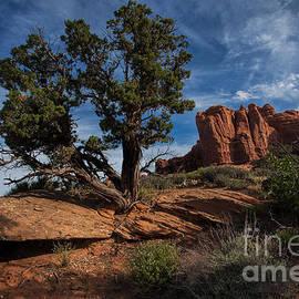 Jim Garrison - The Canyon Trail