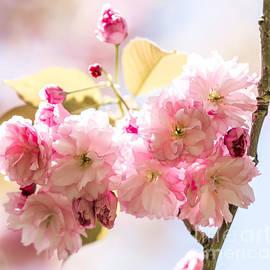 Olga Photography - The Cherry Blossom