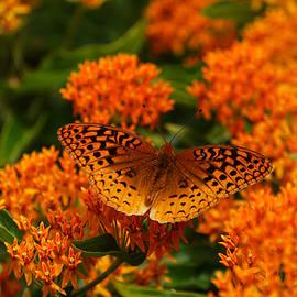 Rachel Cohen - The Color Orange