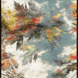 Debra Lynch - The Colors Contemplation