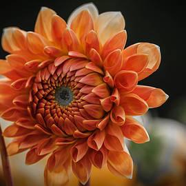 Andrew Brixey - The Colour Orange